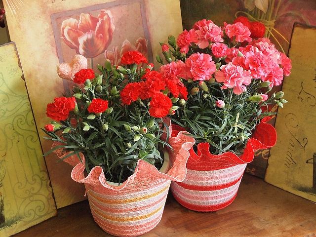 Carnation in a pot(attached a basket and a pic)<span>¥3,500(ex.tax)</span>