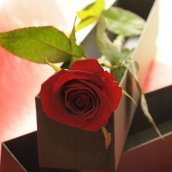 One red rose in a box<span>¥1,500(ex.tax)</span>